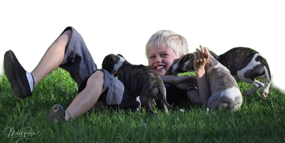 taejaan whippet puppies with boy